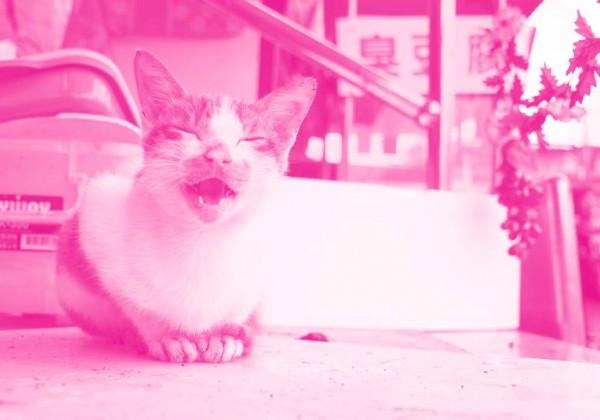 TAIWAN好猫 イメージ写真
