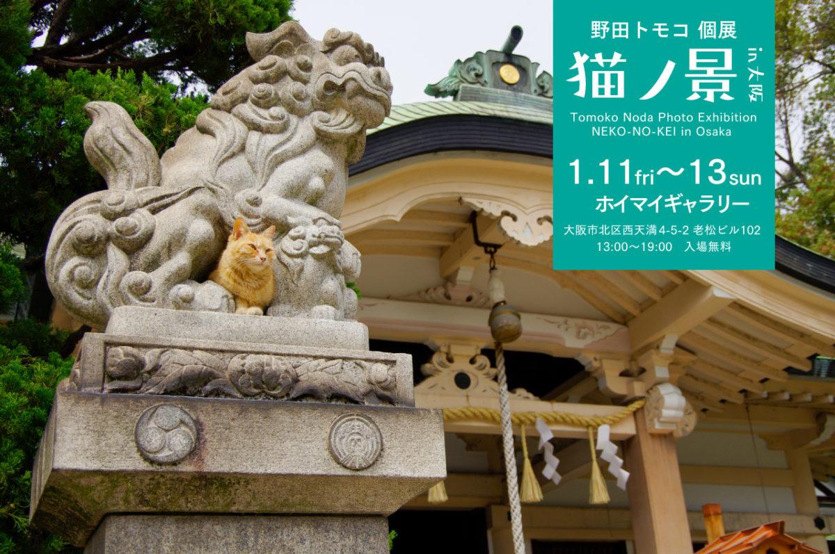 野田トモコ個展『猫ノ景』in大阪
